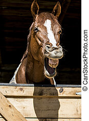 Horse laugh - Horse is laughing outloud