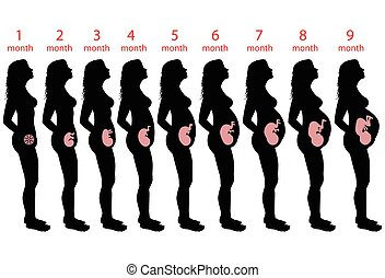 Pregnant woman - Illustration of women in all stages of...
