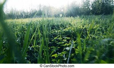 Camera flight over green grass Slow motion