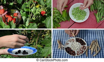 ripe berry legume collage - Hands harvest healthy natural...