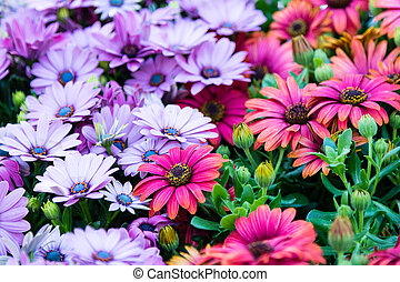 Coneflower - close up image of assortment of color...