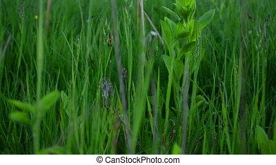 Fresh green grass - Close-up of fresh green grass in summer