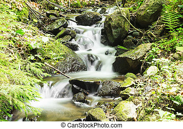 Creek with Waterfalls in the Forest with Green Vegetation