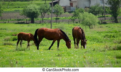 Herd of horses grazing on grass