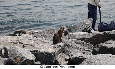 an old fishermen fishing in Istanbul with cat waiting for a quick and free lunch