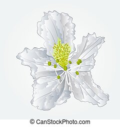 Rhododendron white flower vector.eps - Rhododendron white...