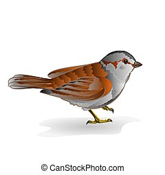 Little bird sparrow vector.eps - Little bird cub sparrow...
