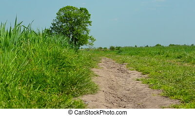 Rural road in the field under blue sky in summer