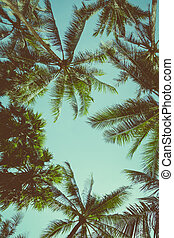 Vintage toned different palm trees over sky background, view...
