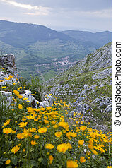 Mountain town with yellow flowers in the foreground