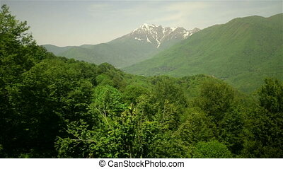 Sochi Mountains covered by green pine tree forests...