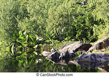 Lake with stone blocks - Lake with stone blocks. Praslin...