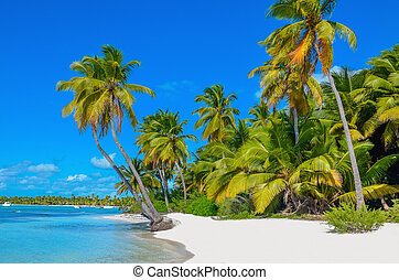 Caribbean beach with white sand and palm trees - Amazing...