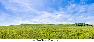 Panoramic view of farmland day scene background