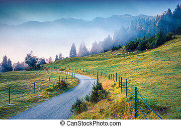 Foggy summer morning in the Triglav national park, Slovenia,...