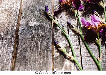 gentle violet irises flowers on wood table - gentle violet...