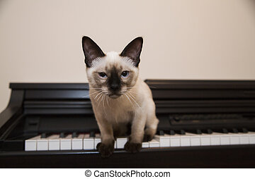 Pussycat is about to jump off the piano - Serious little...