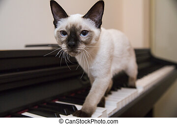 A graceful catstrut on the keyboard - Siamese looking little...
