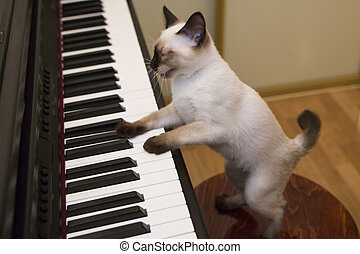 Kitty sings the song while playing piano - Pussycat plays...
