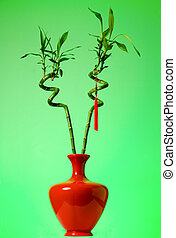 Lucky bamboo - Two stalks of lucky bamboo in a red vase...