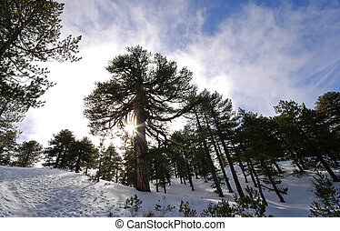 Winter mountain Landscape - Winter mountain landscape from...