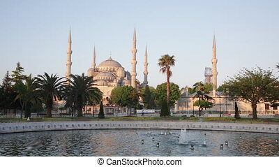 Seagulls bathe in the fountain near the Blue mosque in Istanbul in the early summer morning