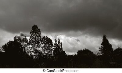 Timelapse of thick clouds and trees - Timelapse with thick...