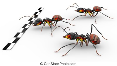 Fire Ants Crossing Finish Line - Three fire ants crossing...