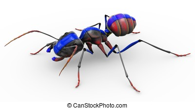 Painted Ant Looking Pretty - An ant with a blue stripe...
