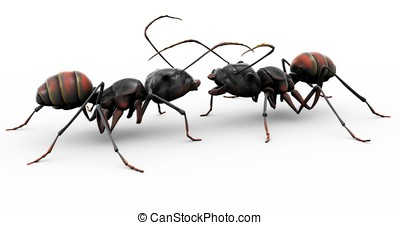 Ants Making Friends - Two ants meeting for the first time,...