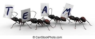 cuatro, hormigas, cuatro, hormigas, equipo, trabajo
