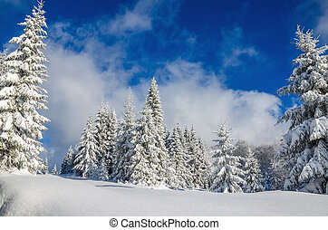 Forest covered with snow in winter, Poland