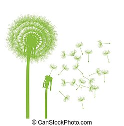 Dandelion seeds blowing away green ecology and time passing...