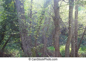 natura, scena, foresta