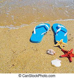 blaues, Ufer,  Sandals, seestern, Schalen