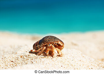 Hermit crab at beach - Hermit crab on beach at Seychelles