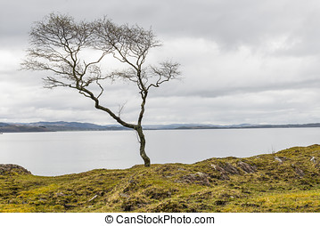 Tree at Sea - Tree at the shore of the sea in Scotland.