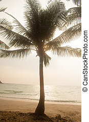 Coconut palms on the beach. - Coconut palms at Ao Phrao...