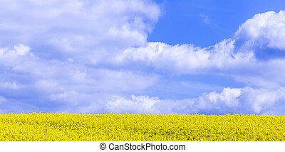 Canola,Oilseed Rape,Biodiesel Crop