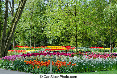Colorful blooming tulips in Keukenhof garden