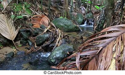 Clear stream in Vallee de Mai Nature Reserve in Praslin....