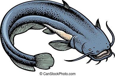 catfish isolated - big catfish isolated on the white...