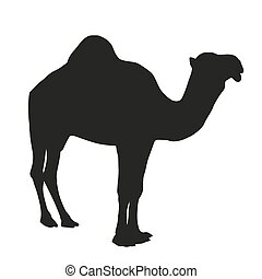 Camel vector silhouette