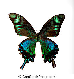 Butterfly - A very beautiful and colorful butterfly specimen...