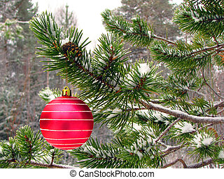 Red ball on tree - Red ball on tree in winter forest...