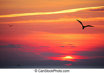 bird silhouettes at sunset - seagull silhouette in an orange...