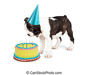 Birthday Dog Blowing Out Candles - Funny Boston Terrier...