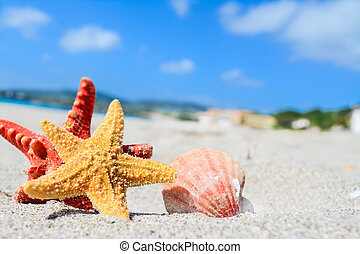 starfish and shell by the sea - red and yellow starfish and...