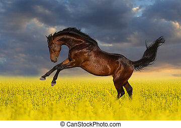 Horse in flowers - Beautiful bay horse run gallop in rape...