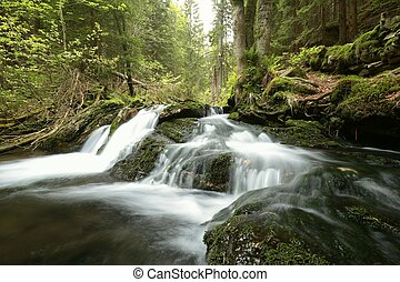 Forest stream in the valley flowing from the mountains.
